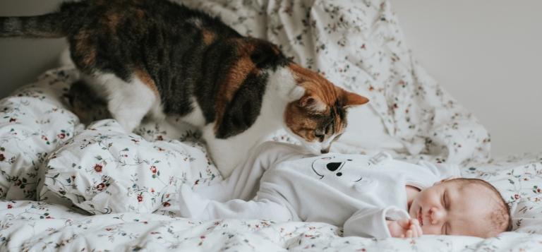 un nouveau-né encore tout bébé couché avec un chat au dessus du bébé