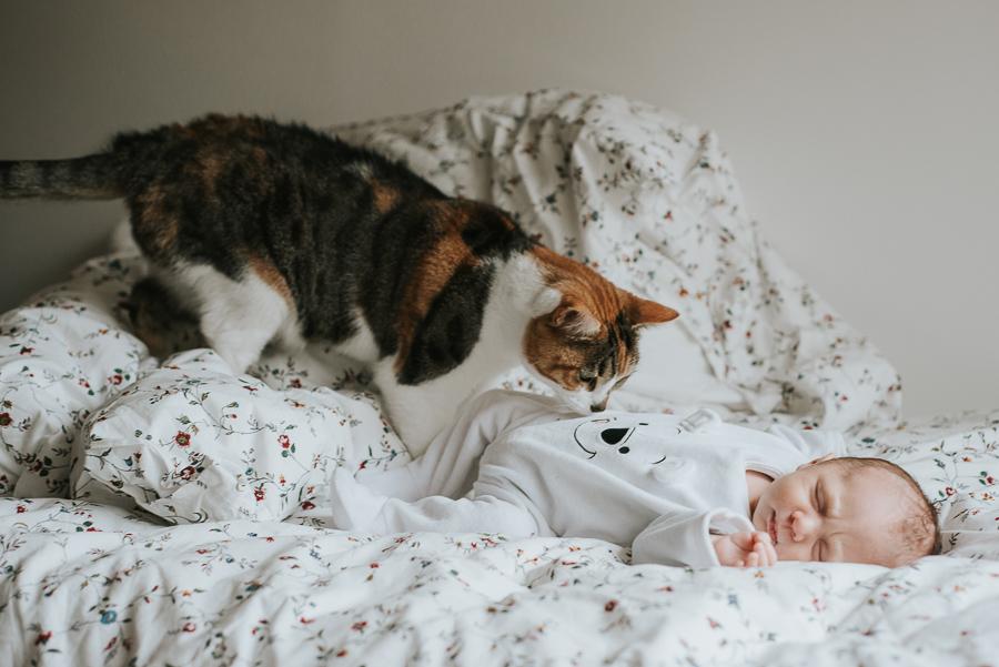 photographe-nouveau-ne-nourisson-bebe-chat-domicile-paris